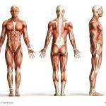 Biometrie Versicherung